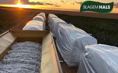 Dicas de armazenagem na colheita do algodão