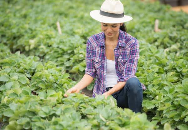 Mulher do agronegócio avaliando os resultados dos produtos nortene