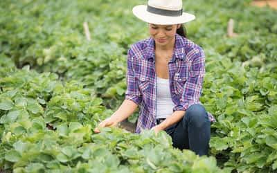 4 soluções da Nortène para o setor de agronegócio