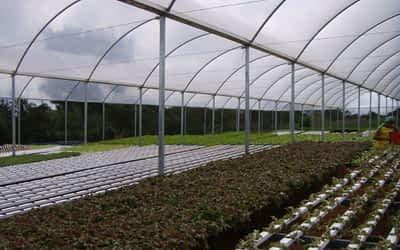 Como implementar uma estufa agrícola?