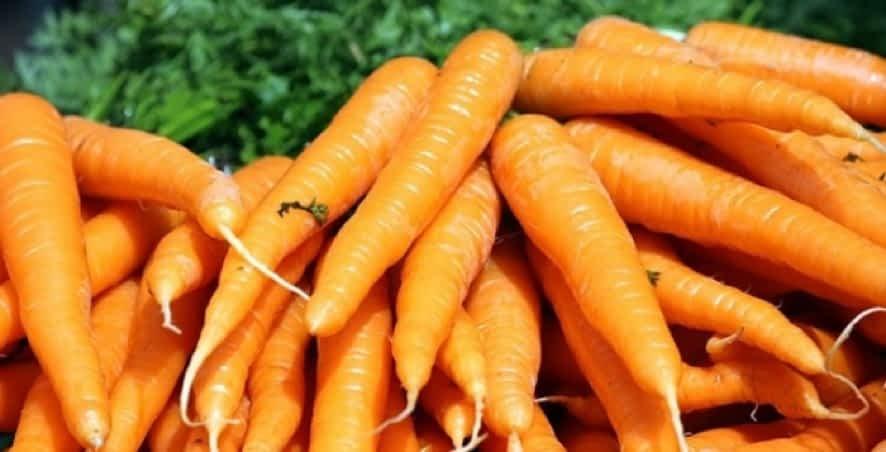 Irrigação e Cenoura - Aumentando a produtividade 20%